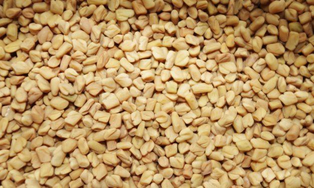 Comment consommer le fenugrec en graines ? Voici nos meilleures astuces
