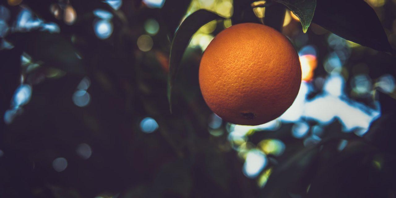 Comment faire zeste d'orange : quelles sont les différentes manières pour obtenir du zeste d'orange ?